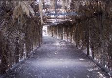 """""""יער בראשית"""", פארק הירקון"""
