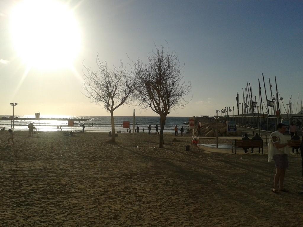 """מי היה מאמין, עצים אמיתיים על חוף הים בת""""א"""